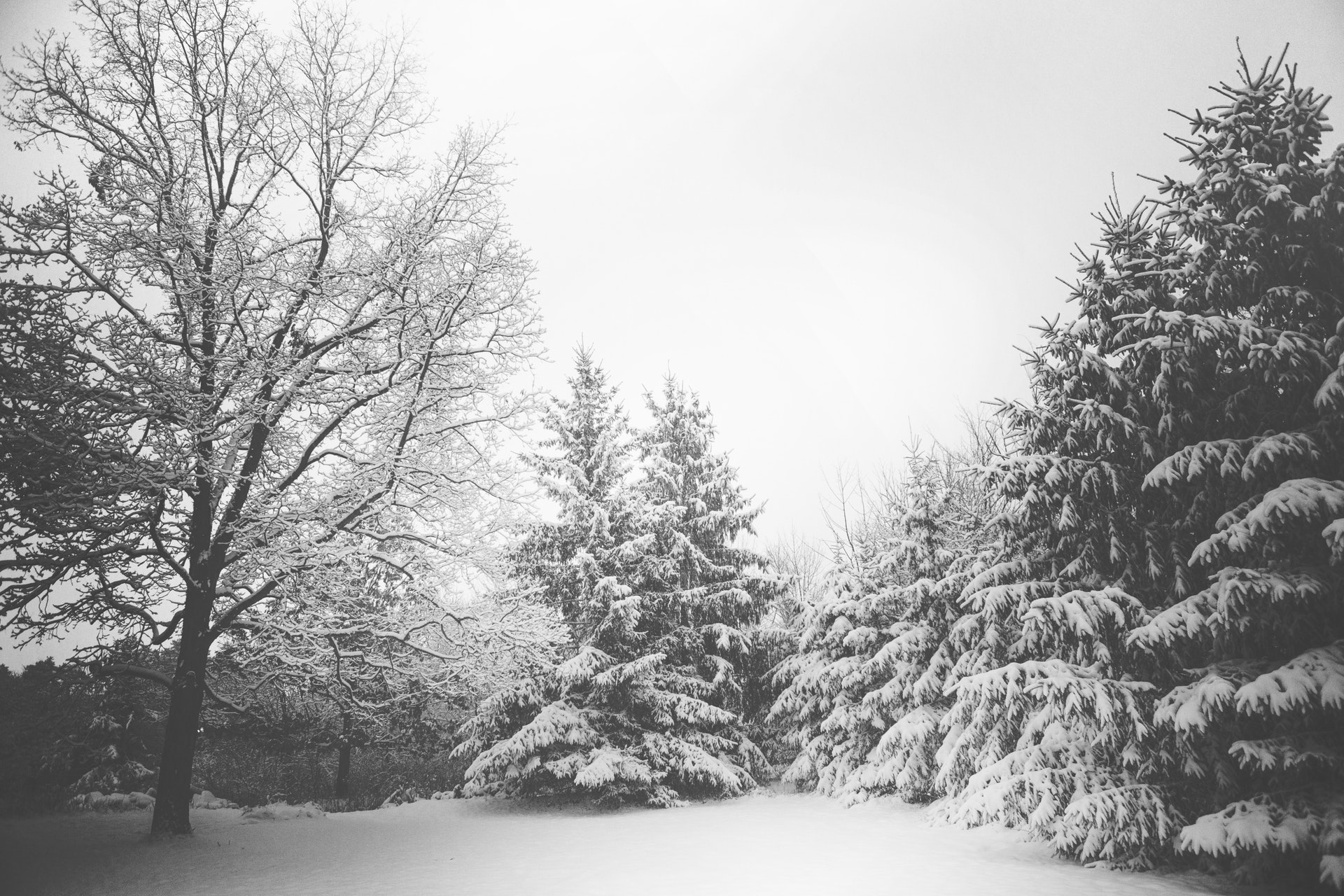 Winter Tree Care - Hertfordshire tree surgeons
