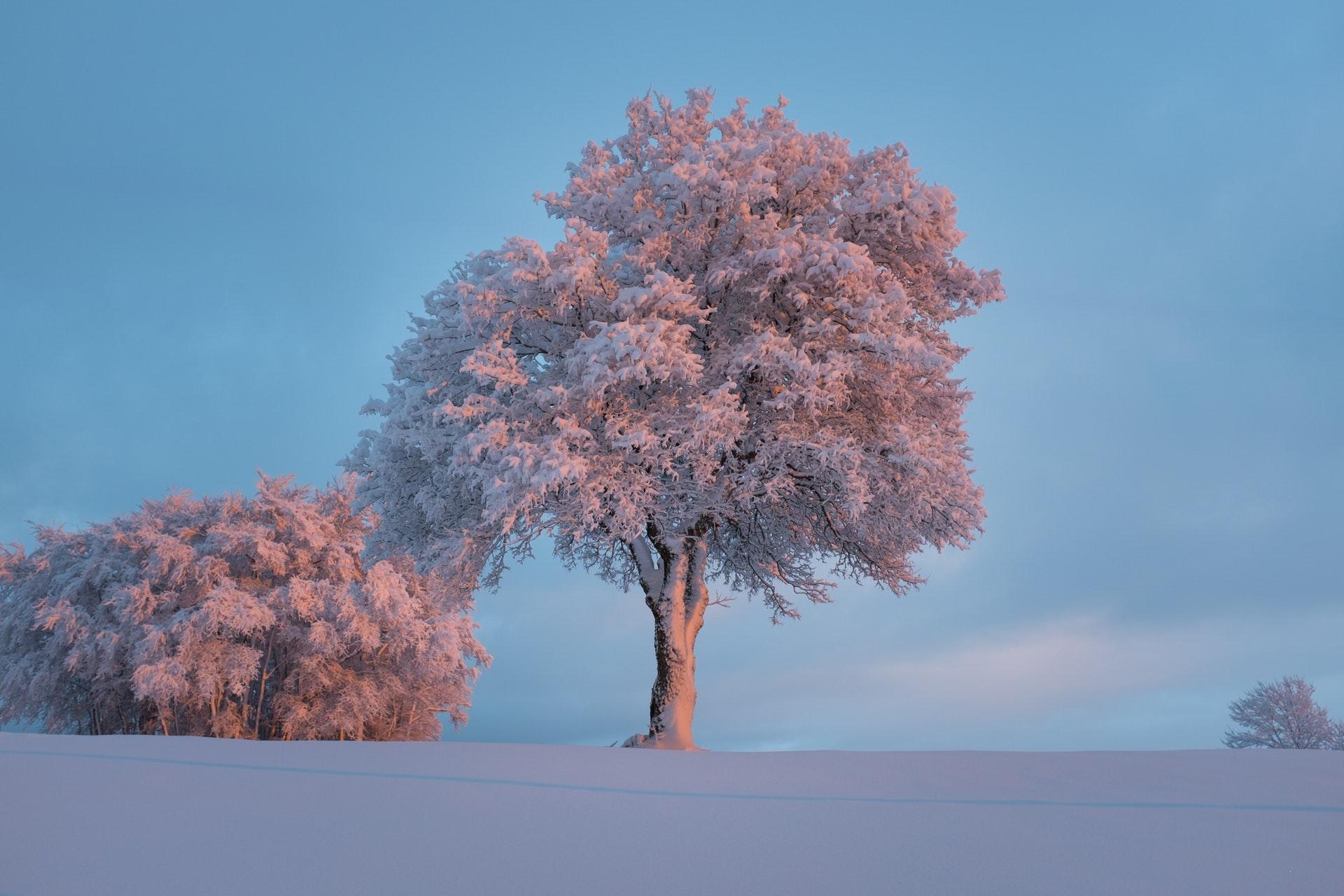 december tree care
