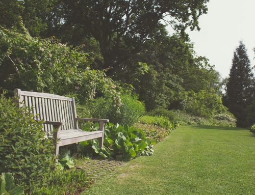 Five British trees to plant in your garden
