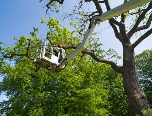 Tree surgery terms explained