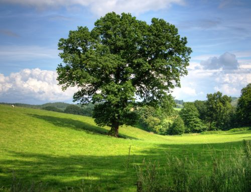 7 Signs for a Healthy Tree