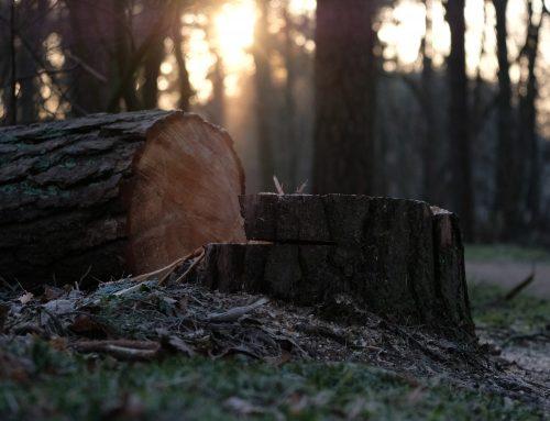 Tree Legislation