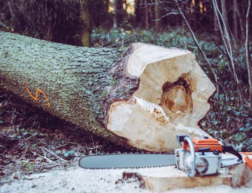 What is a tree felling licence and when you might need one?