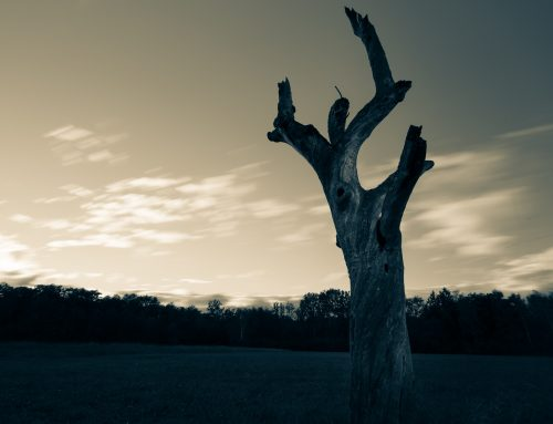 Tree disease update UK: AOD, Ash Dieback 'Chalara' and Beefsteak Fungus