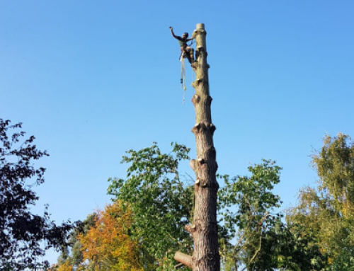 5 things your tree surgeon can do