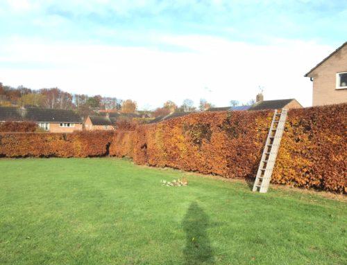 Hedge Cutting before Bird Nesting Season Starts