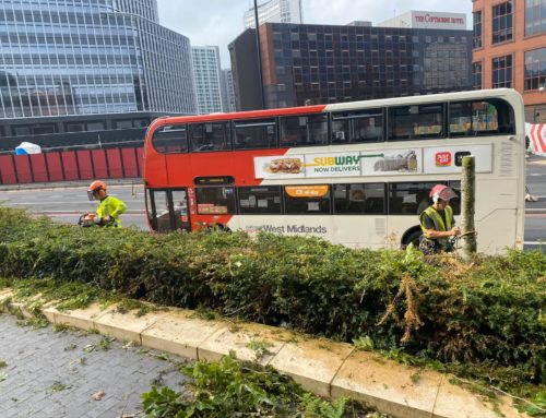 City Centre Tree and Hedge Work for Birmingham City Council