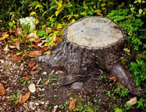 The Importance of Tree Stump Removal