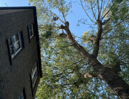 Longacre finds solutions for tricky tree surgery jobs that other companies turn down